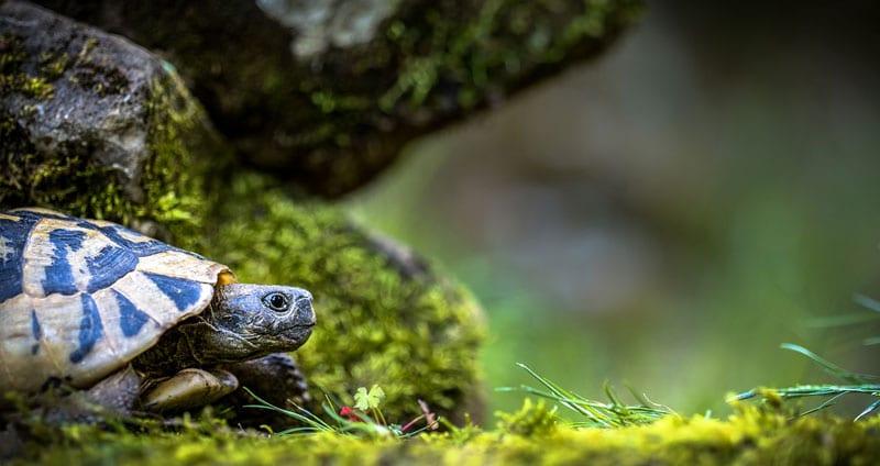 feeding turtle